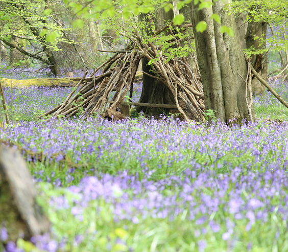 Annes photo of spring bluebells